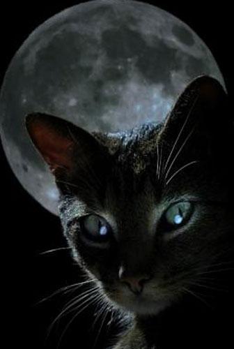 картинки с чёрными кошками
